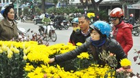 Thành phố Vinh bố trí 7 khu vực bán hoa, cây cảnh Tết