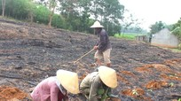 Giữ rừng gắn với xóa đói giảm nghèo ở Khu Bảo tồn thiên nhiên Pù Hoạt