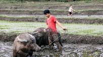 Xem làm ruộng theo kiểu cổ của đồng bào Thái Nghệ An