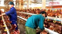 Đẩy mạnh chăn nuôi tạo nguồn hàng hóa sạch