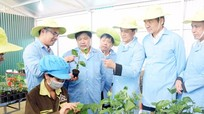 Thứ trưởng Bộ Nông nghiệp đánh giá cao mô hình sản xuất giống chanh leo của Nghệ An
