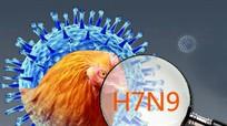 Dịch bệnh cúm gia cầm ở người A (H7N9) có thể vào Nghệ An?