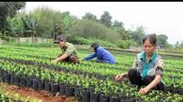 Vườn ươm Yên Tính chuẩn bị gần 2 vạn cây giống các loại