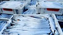 Nghệ An: Có khoảng 4.000 tấn cá hố được xuất sang Trung Quốc