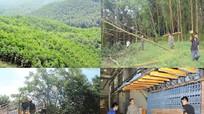 Lợi thế kinh tế rừng ở Nghệ An: Tiềm năng to lớn