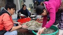 Ngư dân Nghệ An vào mùa săn tôm tít