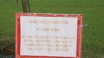 Cảnh báo: TP Vinh đã tiêu huỷ gần 10.000 gia cầm trong vùng dịch