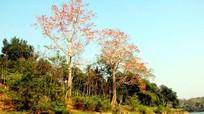 Khúc nhạc rừng tháng 3 miền Tây xứ Nghệ