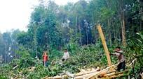 Nghệ An: Cấp chứng chỉ phát triển nghề trồng rừng