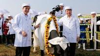 Tập đoàn TH phát triển phôi giống bò sữa tốt nhất thế giới tại Việt Nam
