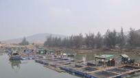 Nơi hạ nguồn sông Cấm