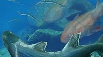 Cá 'bọc thép' 420 triệu tuổi