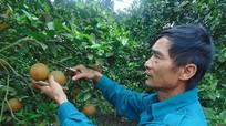 Quỳnh Lưu: Cam chín muộn, nông dân thu tiền tỷ