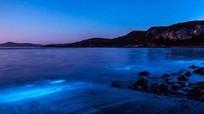Nguồn gốc ánh sáng xanh dương rực rỡ trên bãi biển Australia