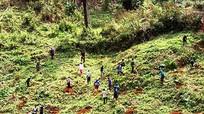 100% cán bộ xã biên giới giúp dân khai hoang đất trồng chanh leo