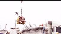 Xây dựng cụm cảng Cửa Lò cần phải đảm bảo môi trường