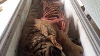 Phát hiện 5 cá thể hổ bị móc hết nội tạng trong tủ đông lạnh
