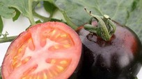Nông dân trồng thành công 5 'siêu quả' đắt đỏ
