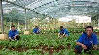 TNXP Nghệ An sang Lào giúp dân trồng keo, nuôi gà