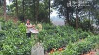 Cơ cấu ngành nghề ở nông thôn chuyển dịch mạnh mẽ