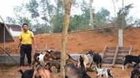 Quỹ Hỗ trợ nông dân Nghệ An giúp nhiều nông hộ làm giàu