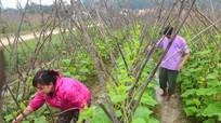 Xuân Sơn (Đô Lương): Đẩy mạnh phát triển nông nghiệp theo hướng công nghiệp