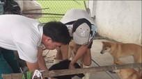 Nghi Lộc: Tiêm vắc xin phòng dại cho 13.700 con chó