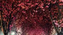 10 đường hầm đẹp mê hồn