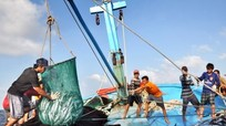 Nghệ An: Sản lượng thủy sản quý 1 tăng 19%
