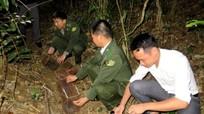 Quỳ Châu: Thả 22 cá thể dúi mốc về rừng
