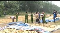 Nghệ An: Thu giữ 5 tấn khoai mài sử dụng hóa chất không rõ nguồn gốc