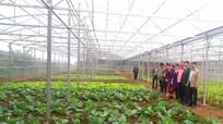 Nghệ An hỗ trợ Xiêng Khoảng (Lào) phát triển nông nghiệp