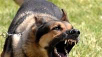 Công điện khẩn về tăng cường công tác phòng, chống bệnh dại trên động vật