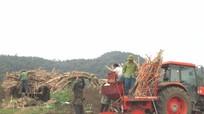 Tân Kỳ: Dồn điền, đổi thửa phát triển vùng nguyên liệu mía