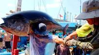 Ngày truyền thống nghề cá 1/4 ở Việt Nam có từ bao giờ?