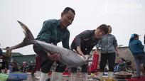 Về Cửa Lò đi chợ cá Hải Giang