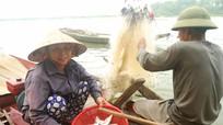Cá mòi - 'quà tặng' của biển cho sông Lam