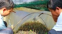 Phát triển cây dược liệu thành cây làm giàu của Việt Nam