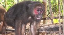 Một gia đình người Thái hiến tặng hai cá thể động vật hoang dã quý hiếm