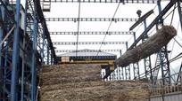 Công ty CP mía đường Sông Con: Nhiều chính sách phát triển vùng nguyên liệu