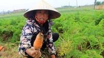 Rau xanh rớt giá, nông dân Quỳnh Lưu thất thu hàng chục tỷ đồng