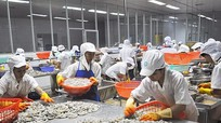 Sản phẩm tôm cá Nghệ An chưa vào được thị trường khó tính