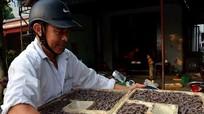 Đào giun biển, thu tiền triệu mỗi ngày