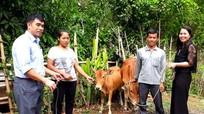 Tặng bò cho hộ nghèo Kỳ Sơn