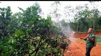 Hàng trăm hộ nông dân chế thuốc trừ sâu từ thảo mộc