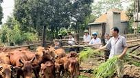 Bán phân bò thu 30 triệu đồng