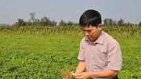 Mô hình phục tráng giống thuần chủng hiệu quả cao ở Nghi Lộc