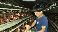 Những trang trại thu nhập cao ở vùng ven đô TP.Vinh