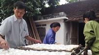 Nam Đàn: 350 hộ dân sản xuất sắn dây thu lãi cao