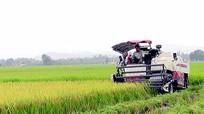 Yên Thành: Năng suất lúa xuân đạt hơn 7 tấn/ha